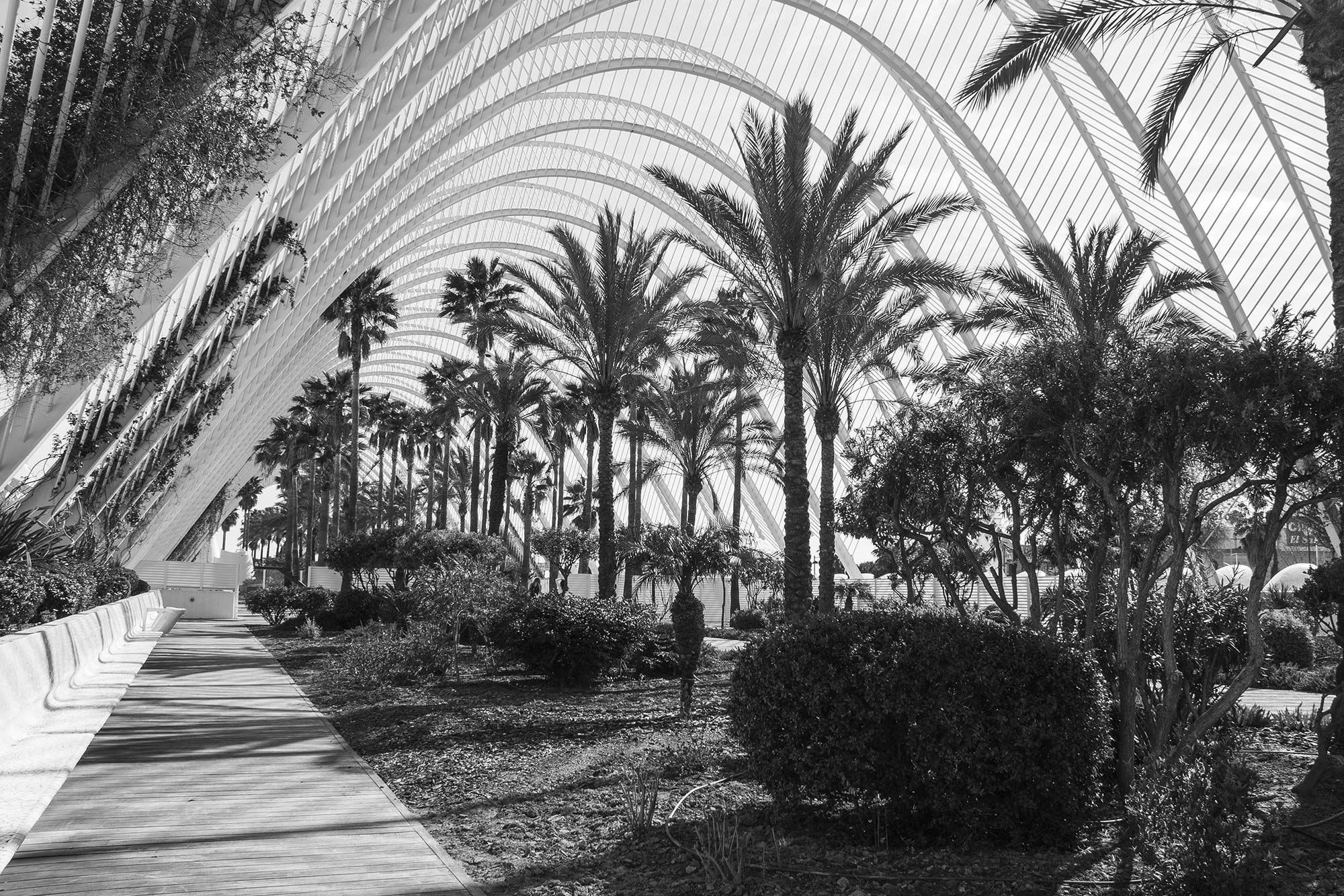 Palms and Arches - Valencia, Spain