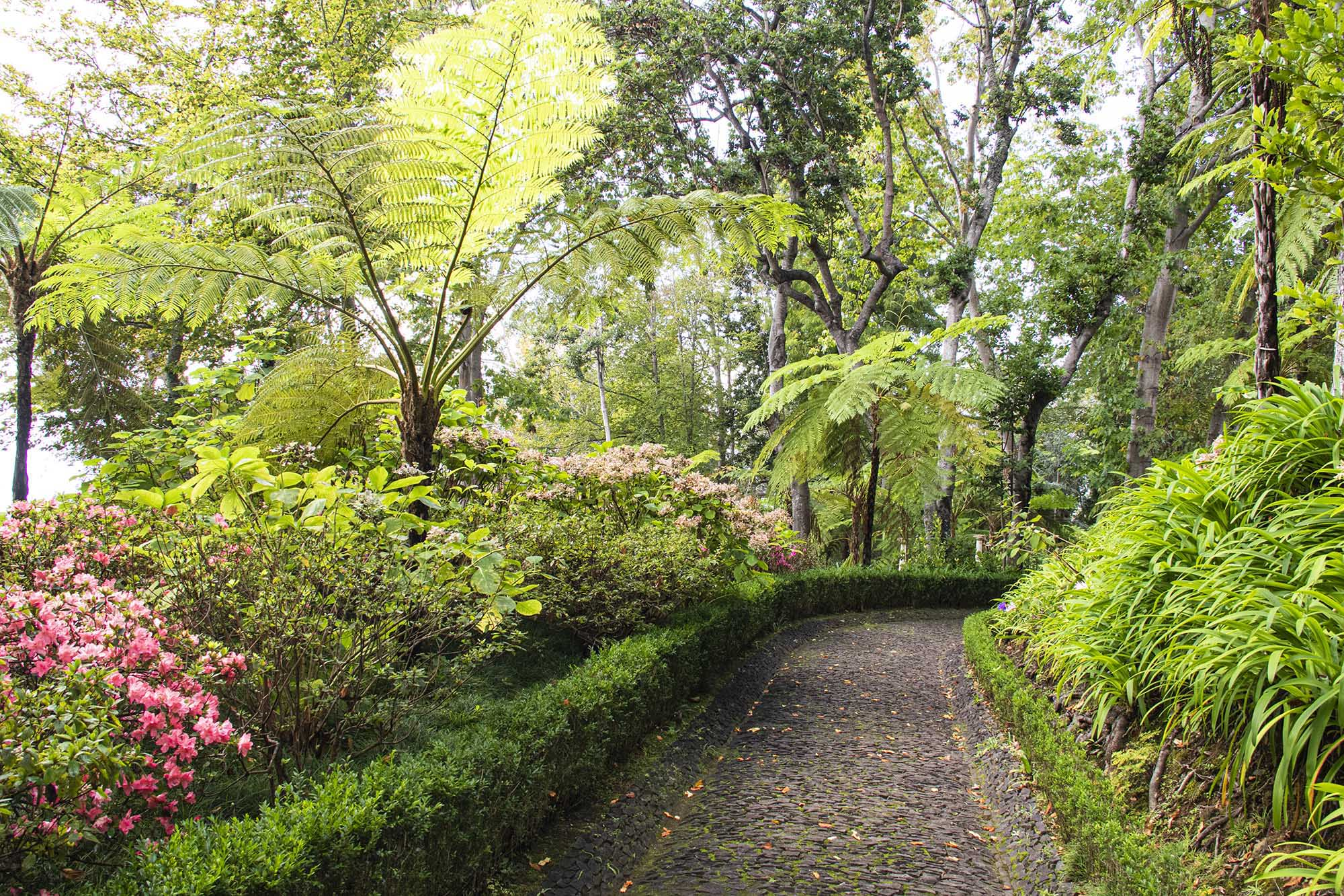 Monte Palace Flora 1