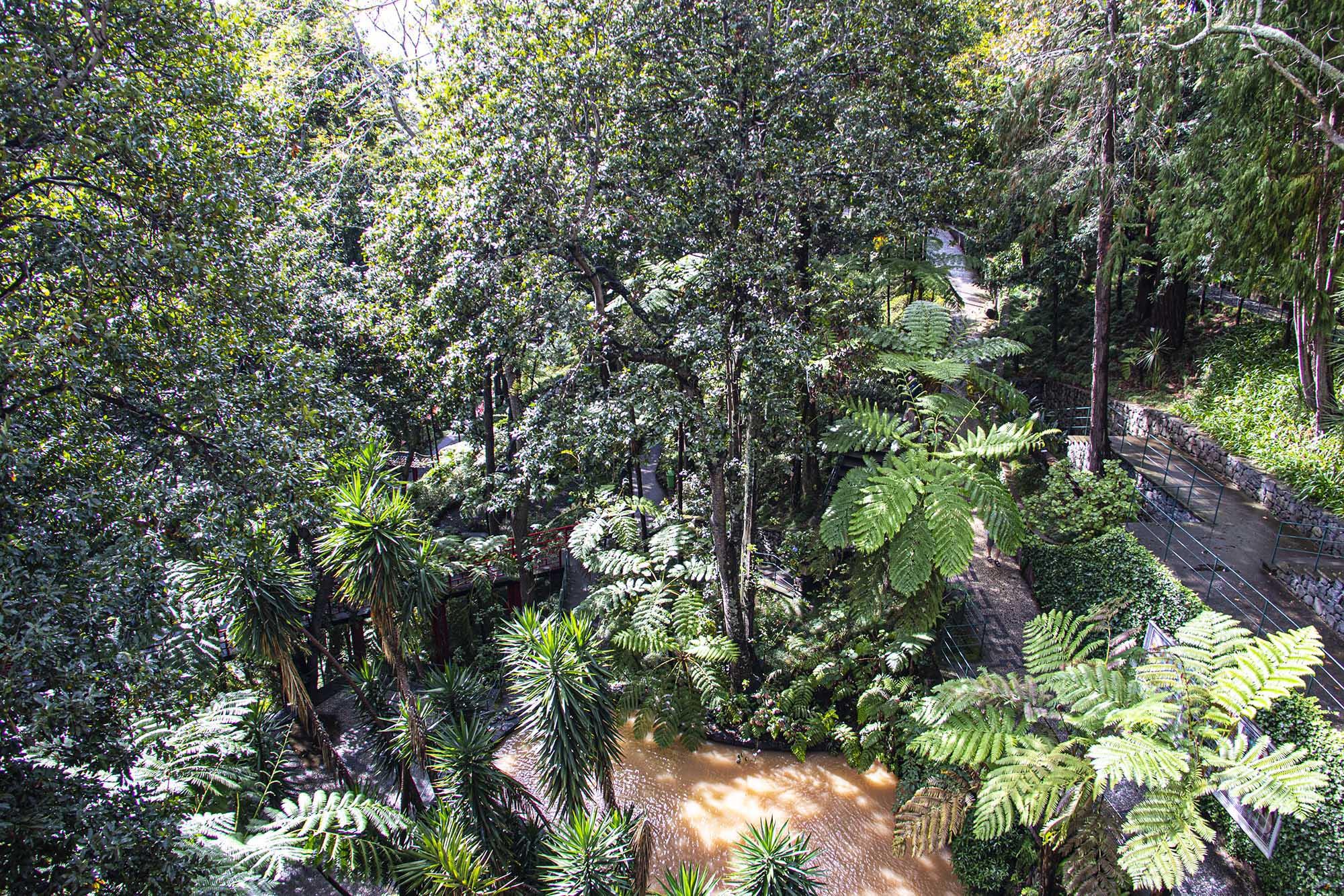 Monte Palace Flora 2