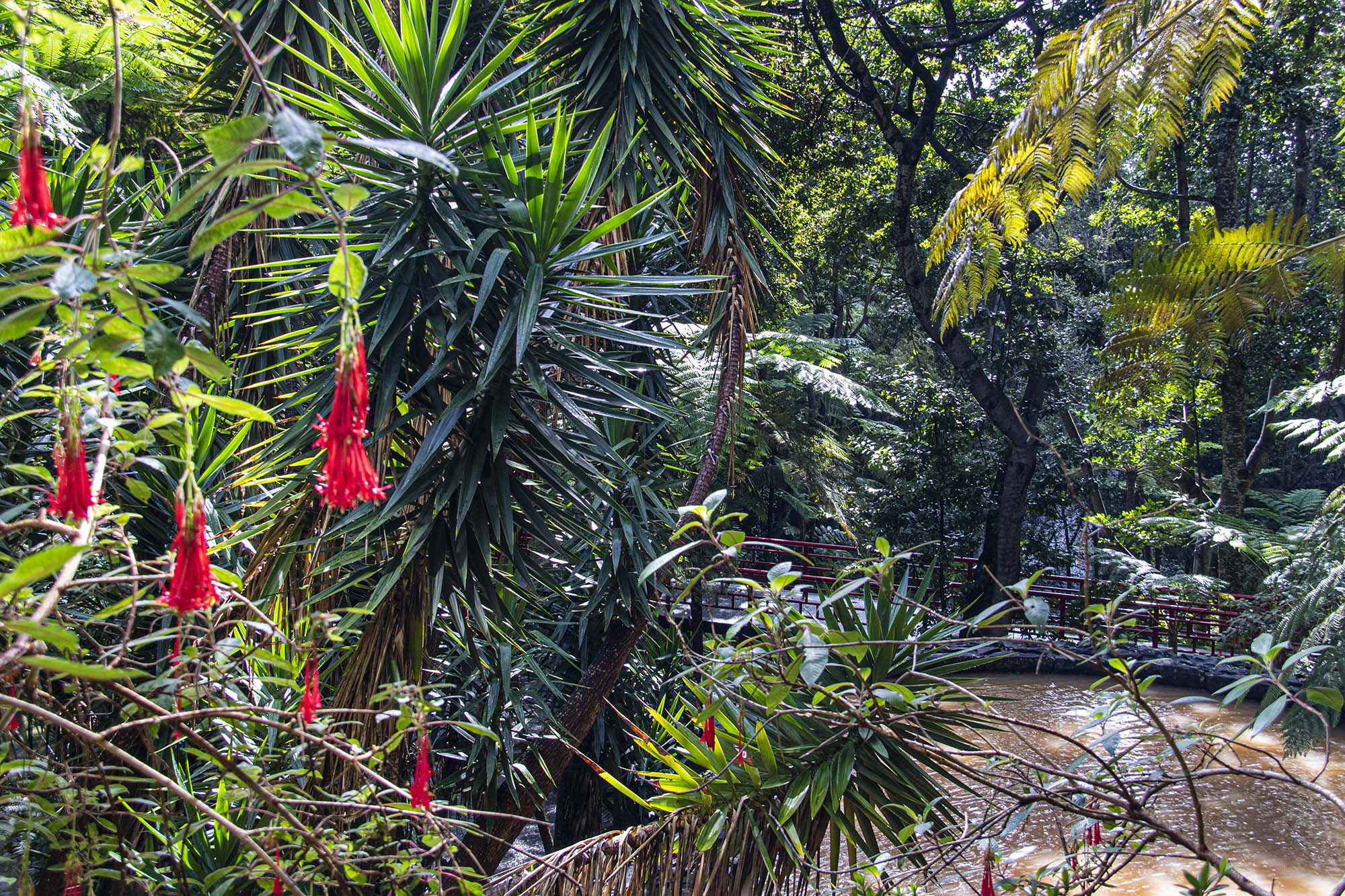 Monte Palace Flora 3